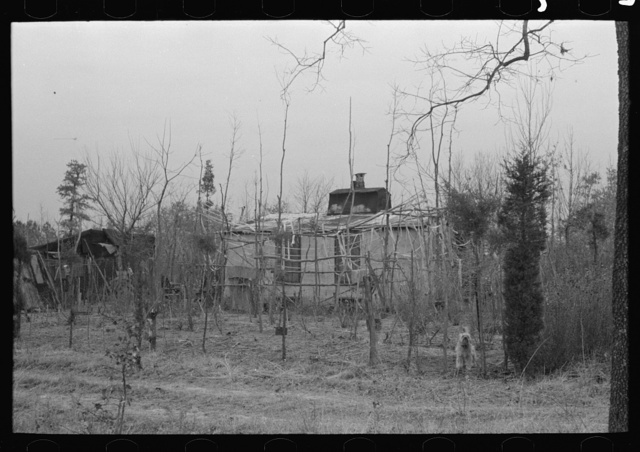 Farmhouse and yard, pine area, New Jersey