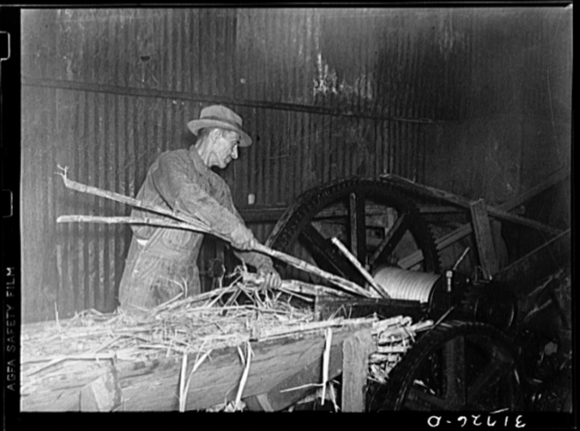 Feeding sugarcane into crusher at sugar mill near New Iberia, Louisiana