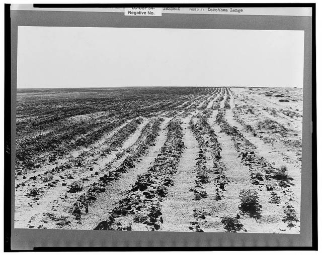 Furrowing against the wind to check the drift of sand. Dust Bowl, north of Dalhart, Texas