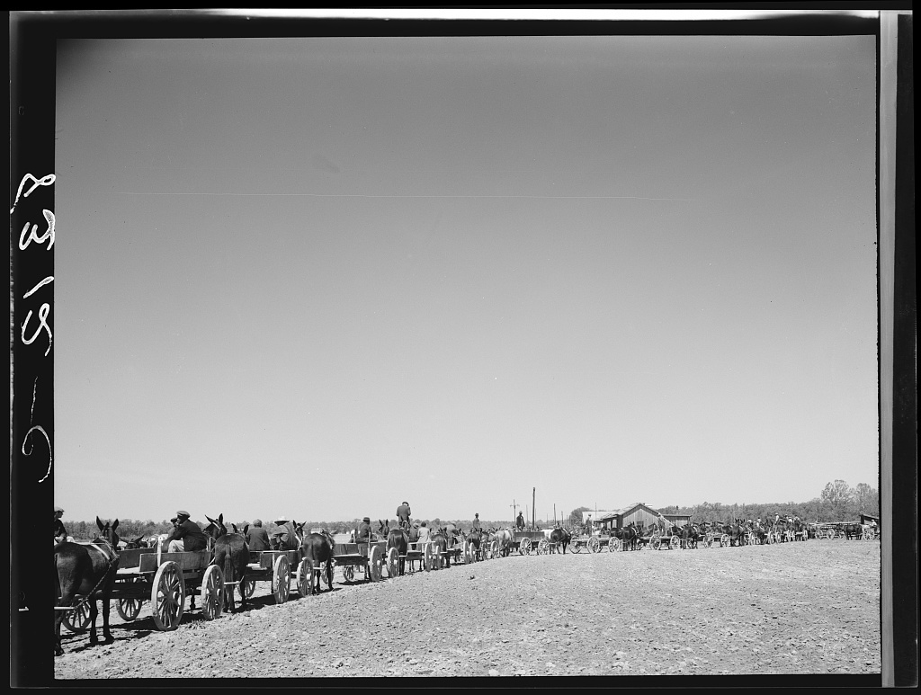 Lines of farmers waiting for cotton seed which they are buying cooperatively. Roanoke Farms, North Carolina