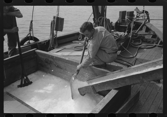 Loading shaved ice into shrimp boat, Morgan City, Louisiana