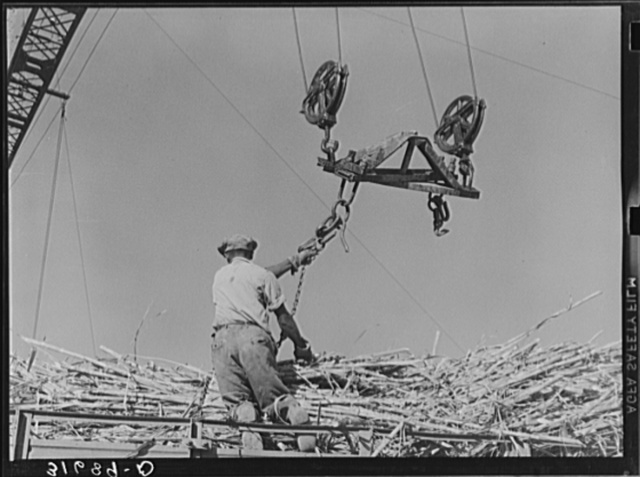Man atop truck getting ready to hook chain in position for hoisting bundle of sugarcane from truck. Sugar mill near Jeanerette, Louisiana