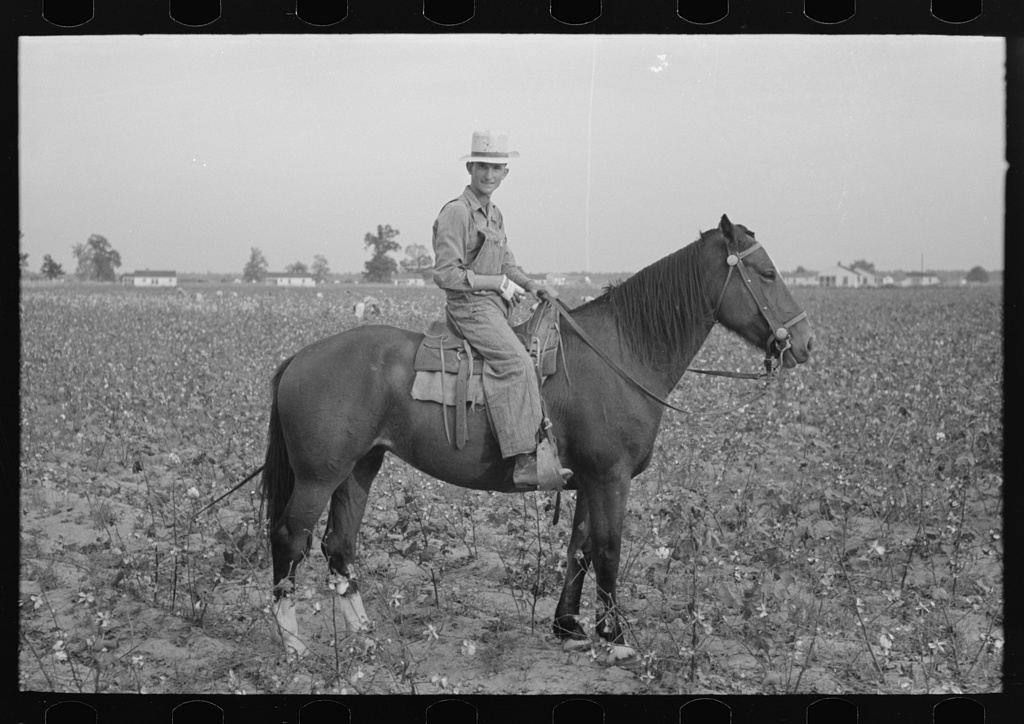 Member of cooperative association, overseer of cotton pickers, Lake Dick Project, Arkansas