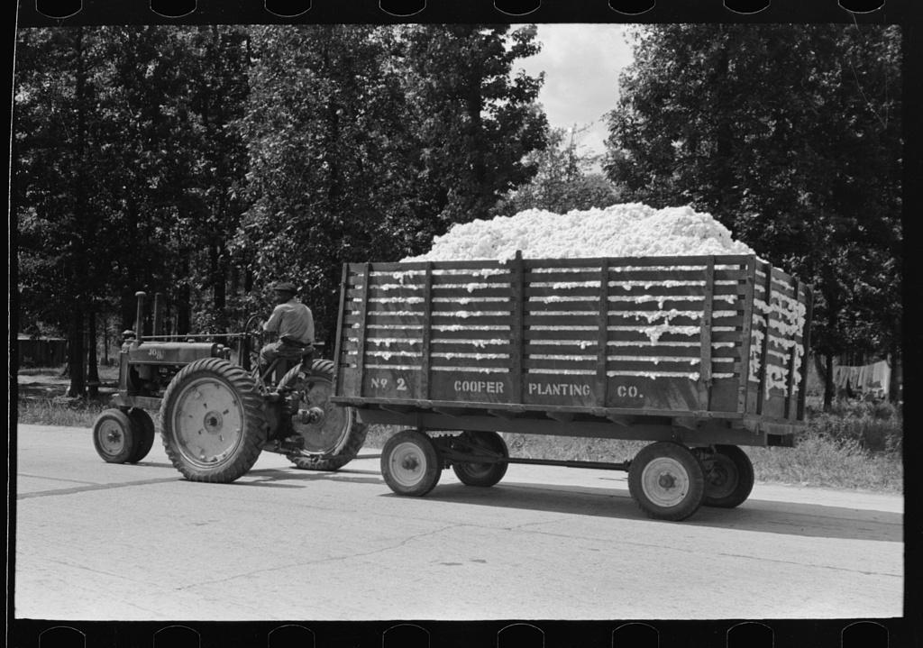 Modern method of transporting cotton to gin, Lehi, Arkansas
