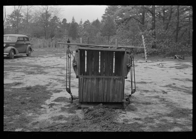 Moss press, pine area, New Jersey
