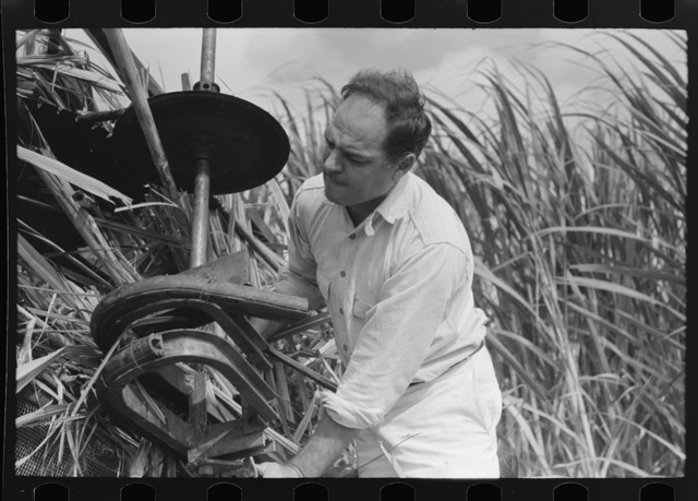 Mr. Wurtele, inventor of sugarcane harvester, attempting to repair the machine, Mix, Louisiana