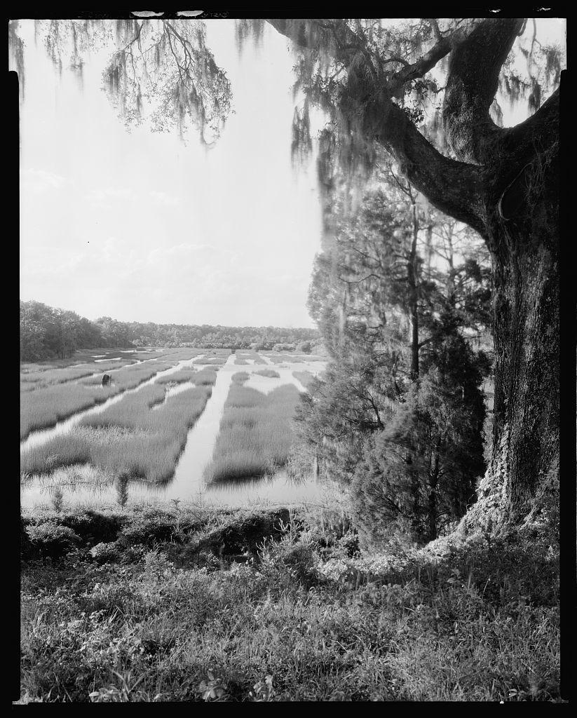 Mulberry, Moncks Corner vic., Berkeley County, South Carolina