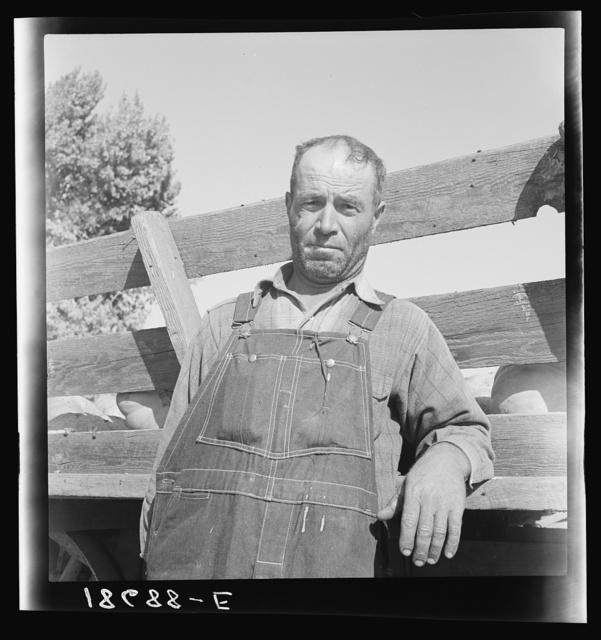 Near Manteca, California. November 1938. Farm Security Administration (FSA) tenant purchase clients, Greeks, from Isle of Crete, formerly rehabilitation clients. Taken from ditch-bank. Had fifteen cows, now have fifty-five