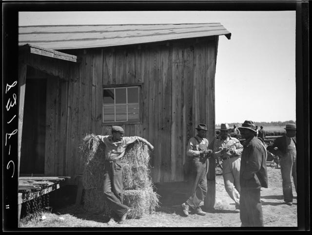 Negro farmers at community warehouse. Roanoke Farms, North Carolina