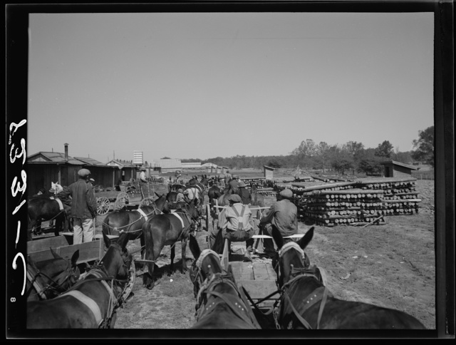 Negro farmers getting cotton seed and other supplies which they are buying cooperatively at Roanoke Farms, North Carolina