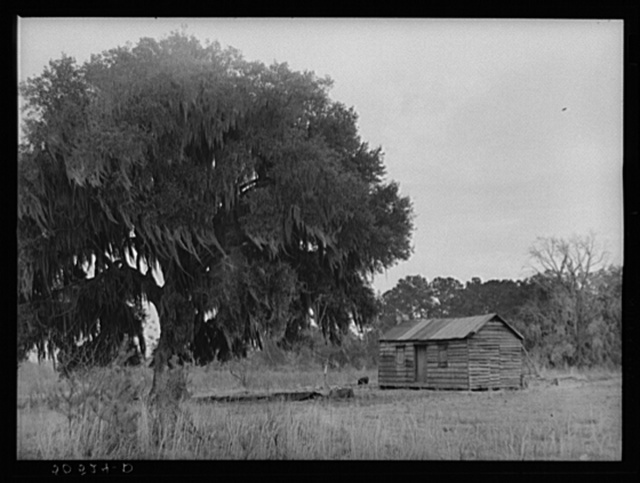Negro home near Summerville, South Carolina