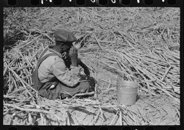 Negro sugarcane worker drinking water in the field near New Iberia, Louisiana