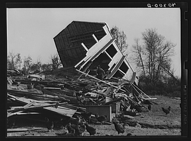 New England hurricane. Chicken house between Worcester and Amherst, Massachusetts