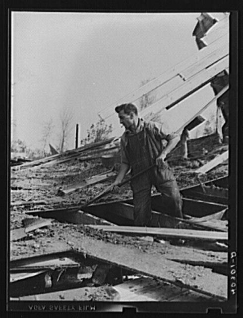 New England hurricane. Farmer clearing debris of chicken house between Worcester and Amherst, Massachusetts