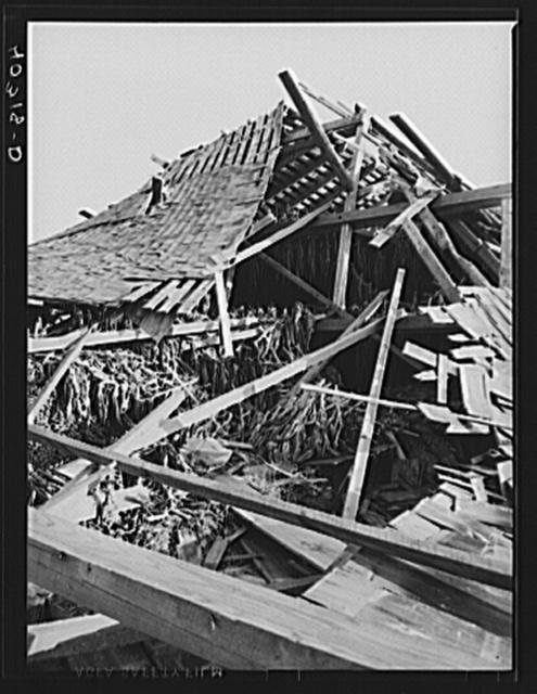 New England hurricane. Tobacco barn in Connecticut