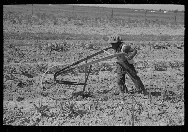 New Madrid County, Missouri. Son of sharecropper cultivating garden