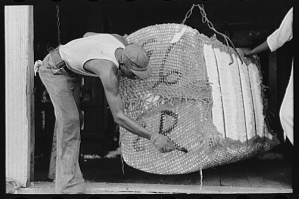 Painting identification marks on a bale of cotton, Lehi, Arkansas