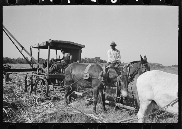 Part of machine developed by Negro for loading sugarcane onto trucks near New Iberia, Louisiana