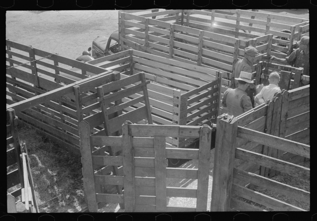 Pens at the Pickaway Livestock Cooperative Association, central Ohio (see general caption)