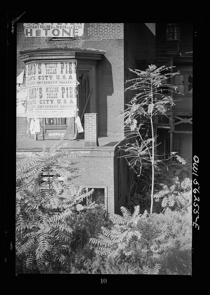 Philadelphia, Pennsylvania. Back yard of an abandoned house at 20th and Arch Streets