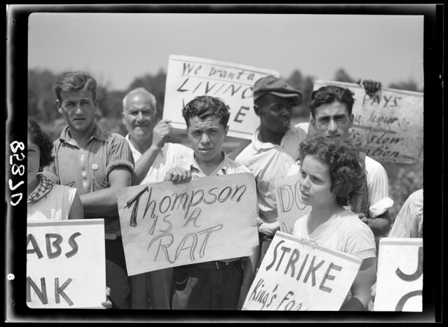 Picket line at the King Farm strike. Near Morrisville, Pennsylvania