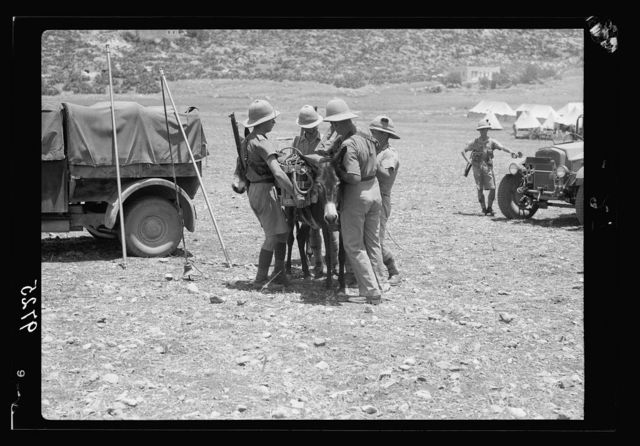 Result of terrorist acts & government measures. Irish Guard loading donkies [i.e., donkeys] with ammunition etc. to follow mountain paths [Nablus]