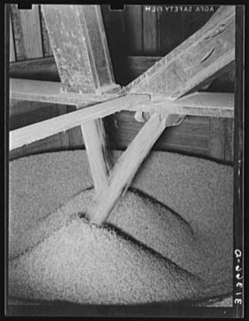 Rice pouring into chutes from storage bin. Crowley, Louisiana