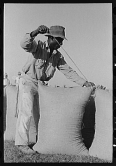 Sewing bags of rice at thresher near Crowley, Louisiana