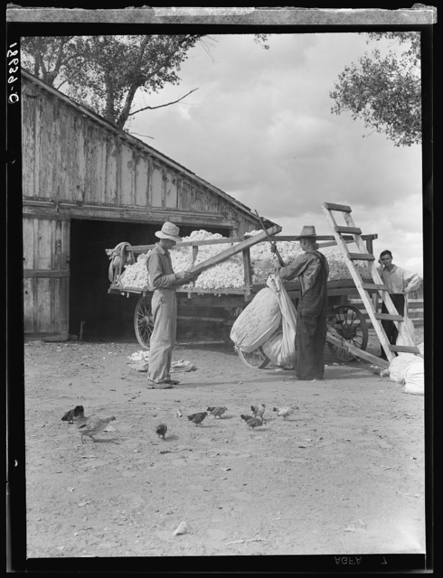 Small cotton farm, Kern County, California. The farmer keeps accounts. Each picker weighs his sack of cotton. In this case the sack weighs approximately fifty pounds. Took three hours to pick, for which, on basis of seventy-five cents per one hundred pounds of picked cotton, he will be paid thirty-eight cents