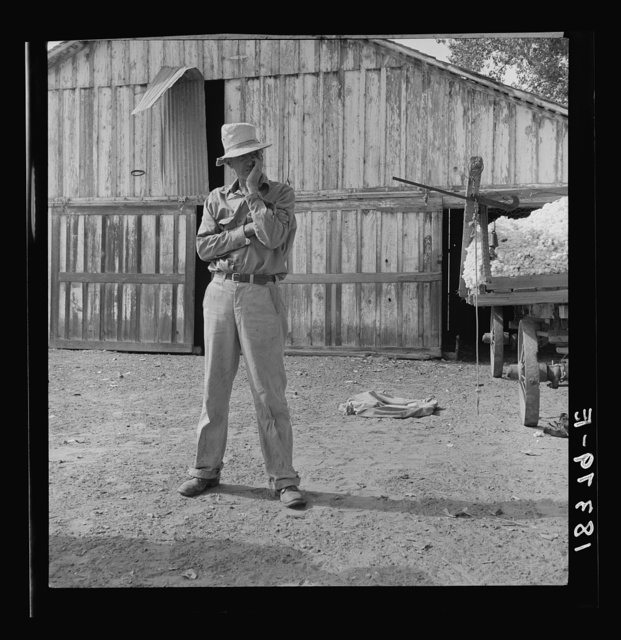 """Small cotton farmer, Kern County, California. He leases the land, and pays 1/4 of the crop for rent, also pays the water bill (irrigation). """"It's come to that there's not going to be any more small farms in California. The big fellows have got us all with a ring in our nose. You take the small farmer like me--we can't come out. There's no difference hardly between me and my pickers--only I've got a place to stay out of the rain"""""""