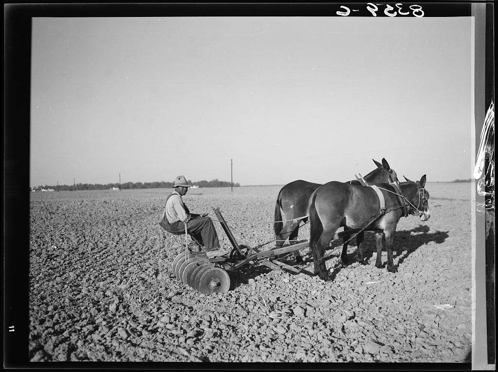 Son of farmsteader at Roanoke Farms, North Carolina