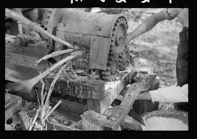 Sorghum cane being crushed for juice at Lancaster Co., Nebraska, sorghum mill