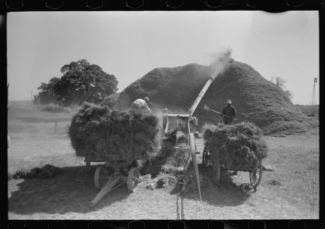 Threshing rice near Crowley, Louisiana