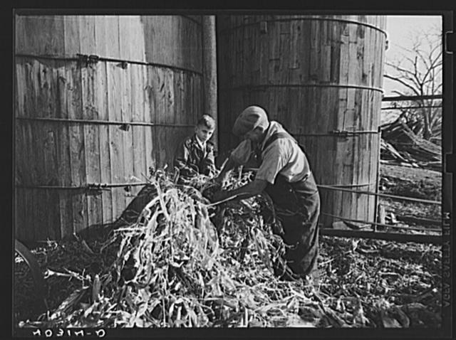 Tolland County, Connecticut. Mr. Schneider filling a silo on his farm