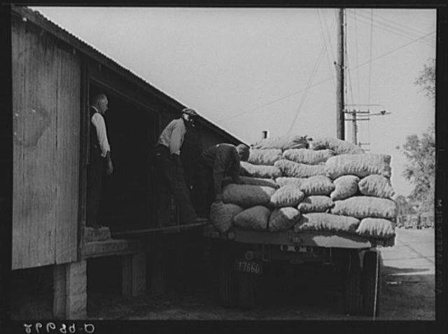 Unloading bags of potatoes at railroad yard. Freehold, New Jersey