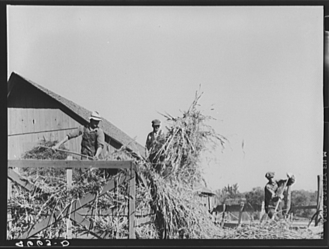 Unloading sorghum cane at farm of rehabilitation client. Gage County, Nebraska