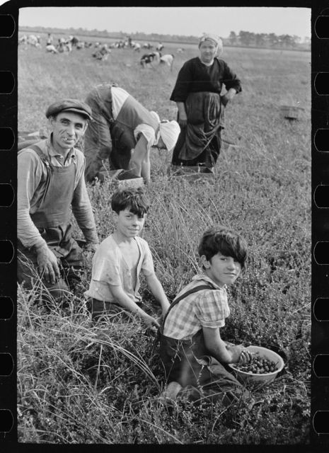 The photographs in the Farm Security Administration / Office of War Information Photograph