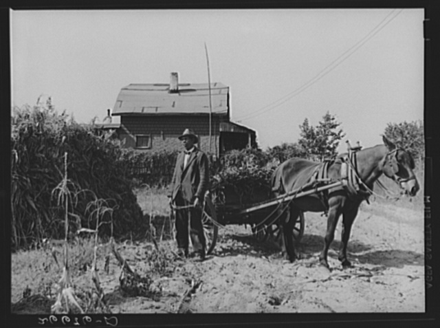 "Vacant lots are used as gardens by farm workers living at ""Eighty Acres."" Glassboro, New Jersey"