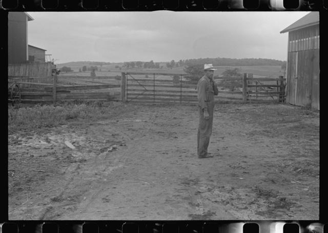 Virgil Thaxton, farmer, in barnyard of Thaxton farm, near Mechanicsburg, Ohio