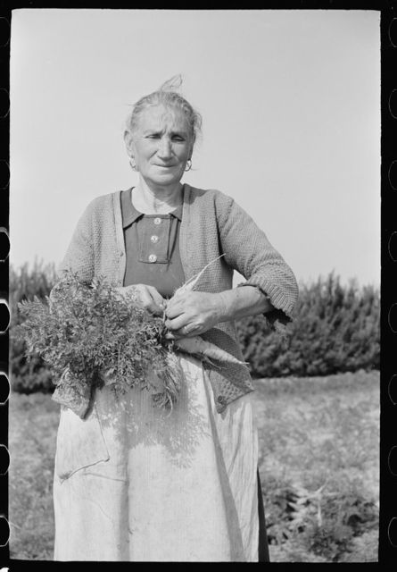 Woman picking carrots, Camden County, New Jersey