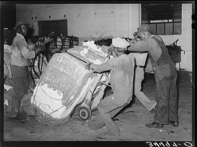Action in loading a bale of cotton onto truck for transporting to compress. Houston, Texas