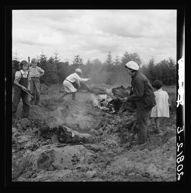 After bulldozer has taken out and piled the heavy stumps, the family gathers the debris, roots and chunks from the field to the stump pile for burning. Negative made in rain. Western Washington, Thurston County, Michigan Hill. See general caption number 36