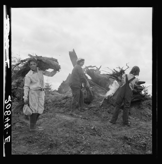 After the bulldozer has taken out and piled the heavy stumps, the family gathers the debris, roots and chunks from the field to the stump pile for burning. Negative made in rain. Western Washington, Thurston County, Michigan Hill. See general caption number 36