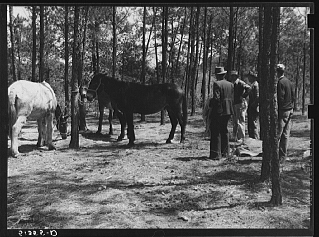 Atlanta mule warehouse sends a camp into rural sections of Georgia for several weeks at a time to sell mules to farmers