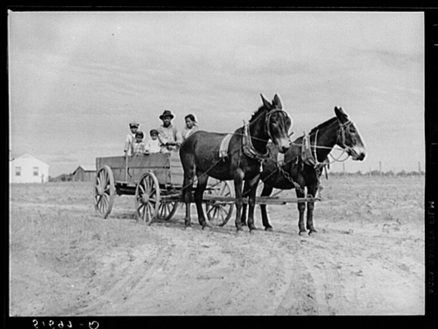 Ben Turner and family in their wagon with mule team. Flint River Farms, Georgia