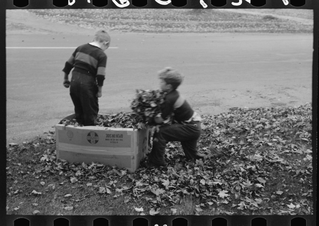 Boys gathering leaves into cardboard box. Front lawn in Bradford, Vermont