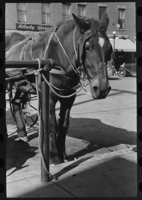 Bradford, Vermont. Horse tied in town