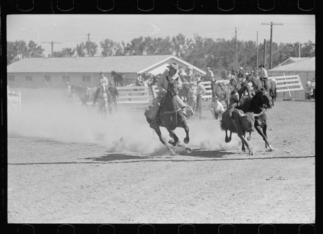 Bulldogging, rodeo, Miles City, Montana