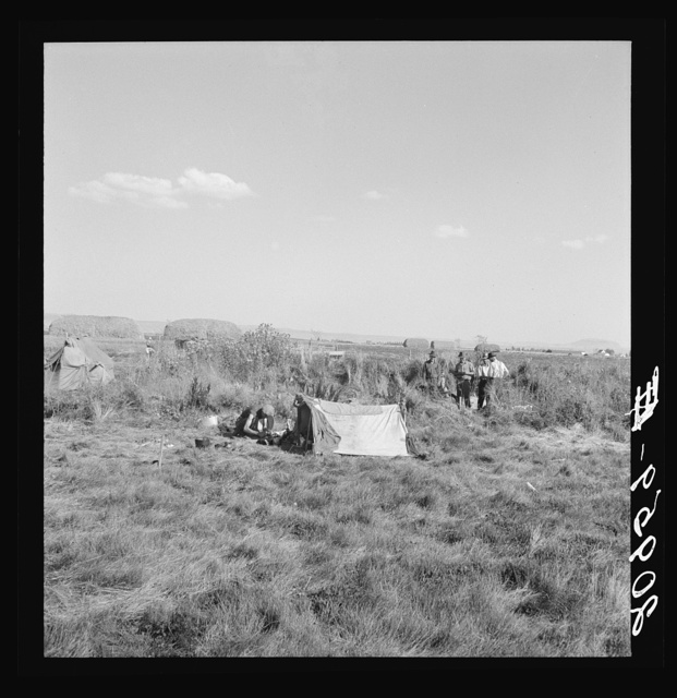 Camp of single men. Tulelake, Siskiyou County, California. Potato pickers. See caption number 63-1