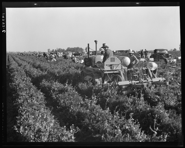 Carrot digger. Imperial Valley, California